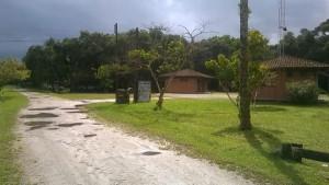 Palmito e seus substitutos são destaques em floresta preservada