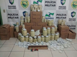 Policiais ambientais fecham fábrica de palmito em Paranaguá